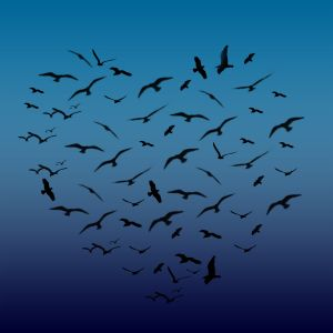 heart_shaped_birds