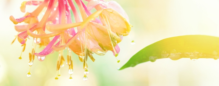 Bach-Flower